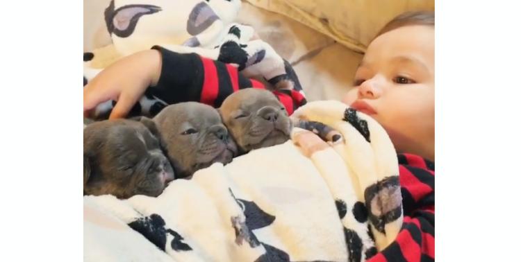 【可愛すぎるお昼寝!】沢山の子犬と赤ちゃんが一緒に眠る姿が …かわいくて癒される (;∀;)♡ 8枚