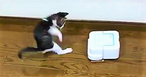 【この前まで平気だったのに!】お掃除ロボットと出会った子猫。突然ビックリし始める…(; ・`д・´)