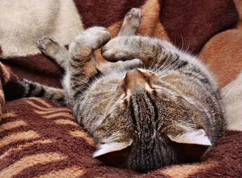 猫が震える。震える原因や考えられる病気、治療法、予防法について