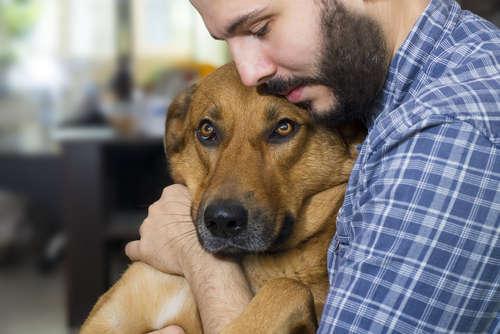 犬の腎臓病 考えられる原因や症状、治療法と予防法