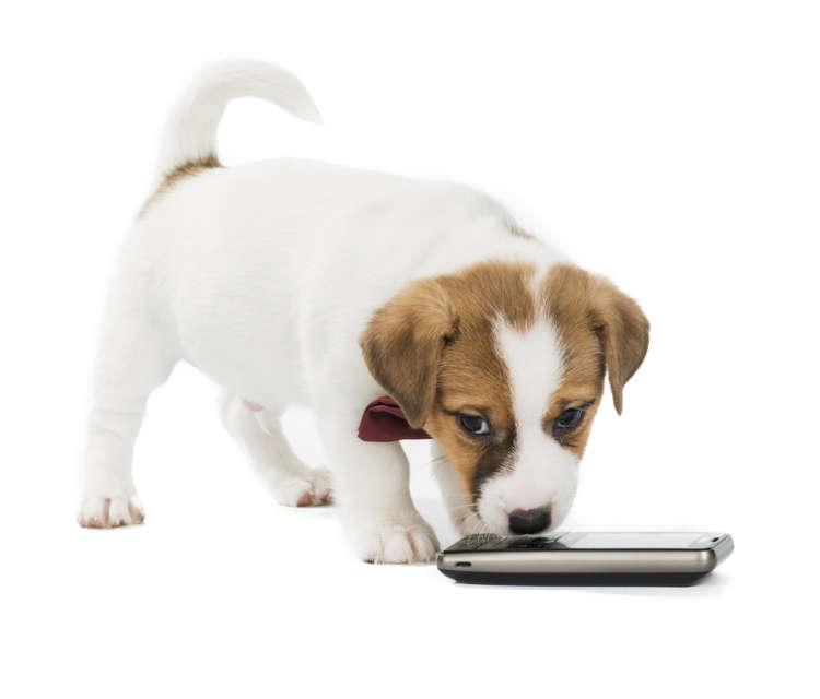 犬友だちとのやりとりを盛り上げる! おすすめの【犬】LINEスタンプ