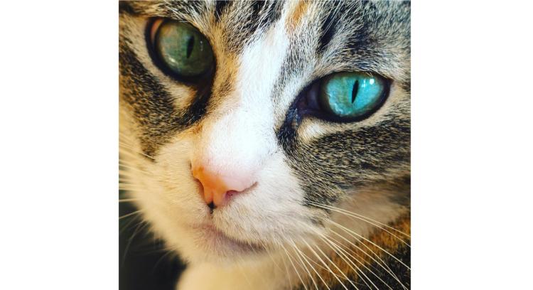 """【まるで宝石みたい】ネコたちの """"美しすぎる目"""" に、心奪われる写真集(10枚)"""