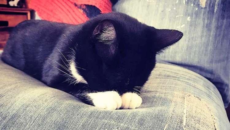 """【オデコとお手てがピタ♪】 いつまでも見ていたい、ニャンコの """"ごめん寝"""" を集めました…♡(7枚)"""