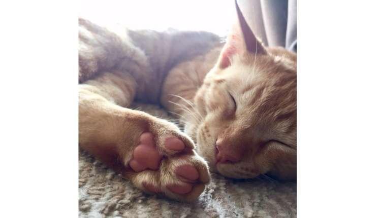 【猫の肉球に恋しそう♡】 厳選!ニャンコたちのプニプニ肉球を集めた、幸せすぎる写真集♡ 8枚