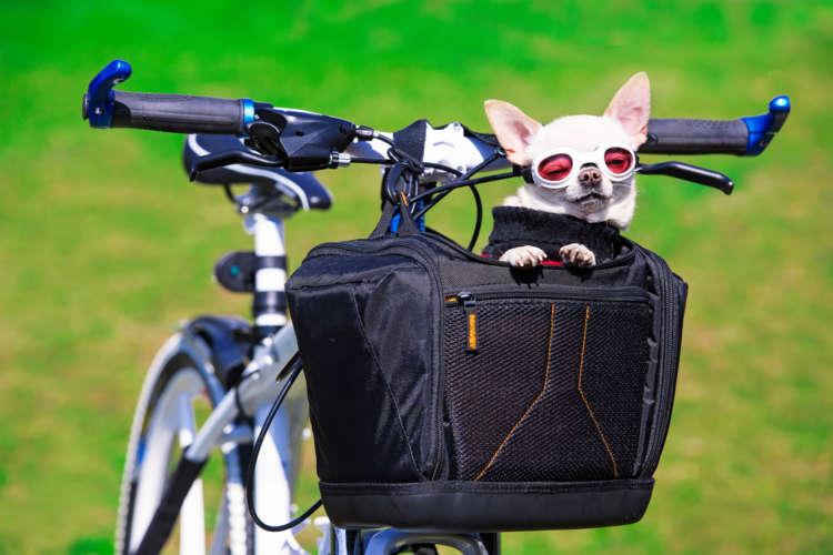犬を自転車に乗せてサイクリング。関連グッズと注意点の紹介