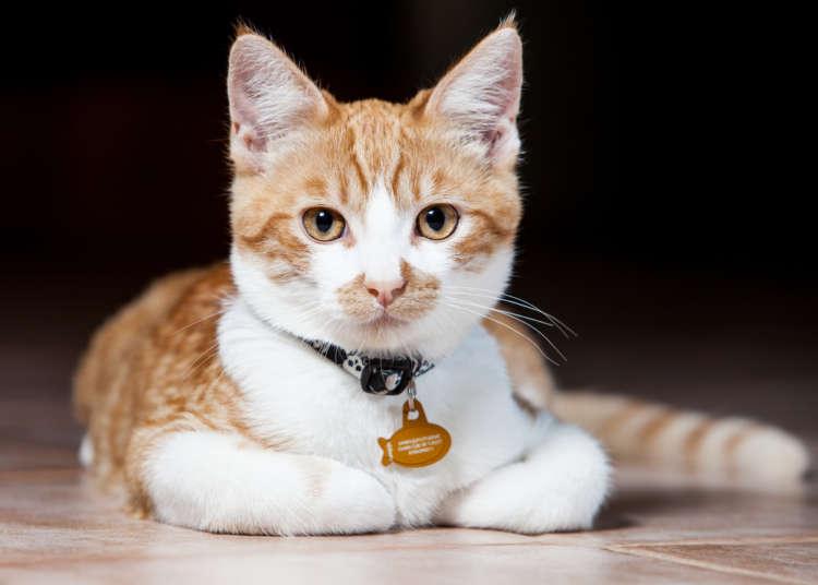 意外と行動範囲が広い猫の迷子対策に。GPS付きの首輪について