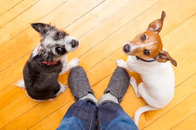 どうすれば上手くいく? 犬の多頭飼い。新入り受け入れの心がまえから日常生活まで