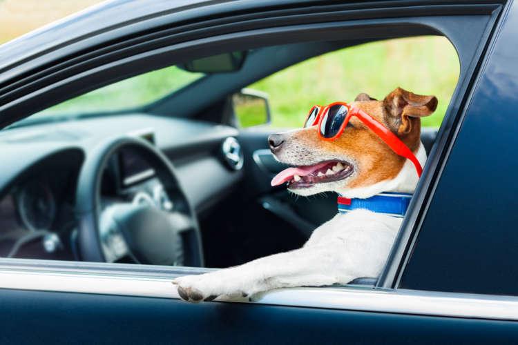 《東日本編》犬と快適ドライブ! 高速道路のドッグラン付きSA・PAをご紹介