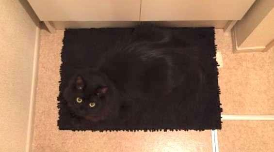 【同化しすぎ!】お風呂から出ると、黒いバスマットが見つめてきた!その正体にドキッ(゚д゚) 4枚