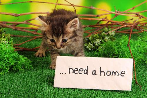 一つでも多くの命を救うために。捨て猫を拾ったらすべきこと