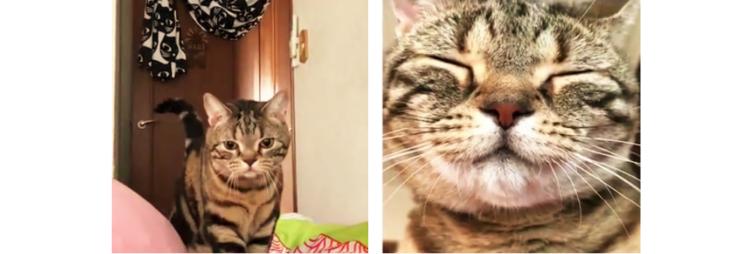 【朝一スマイル】毎朝飼い主さんを起こしに来る猫→ その笑顔で1日がハッピーになりそう(*´Д`)♡