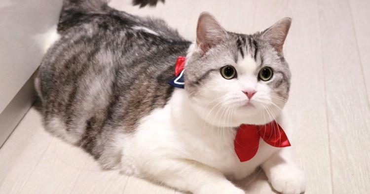 """【気分は女子高生♪】飼い主さんが作った """"セーラー首輪"""" をしたネコ。その姿がかわいすぎた♡ 8枚"""