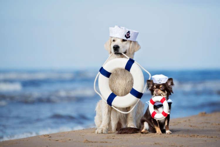 愛犬と船旅へ。犬と一緒にフェリーに乗るにはどうしたらいい?
