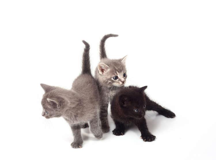 オンリーワンな魅力あり。ミックス猫ってどんな猫?