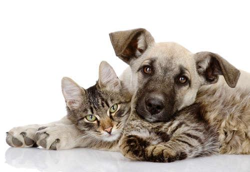 犬と猫、一緒に飼う場合のポイントは? 同居の注意点について