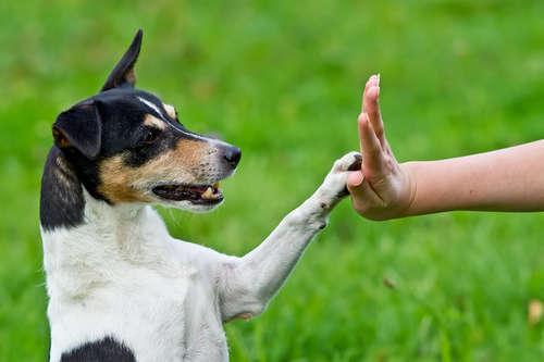 成犬でも間に合う! しつけのポイントと実践方法