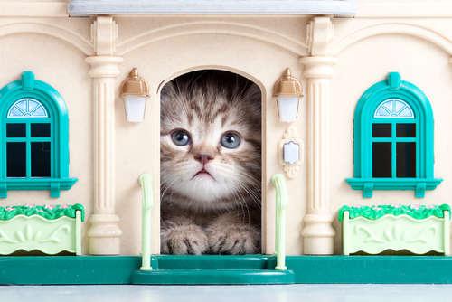 仔猫はいつから留守番できる?  準備や注意点などを徹底紹介