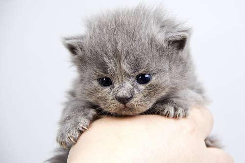 【獣医師監修】仔猫が生まれてから目が開くまでの期間はどれくらい?