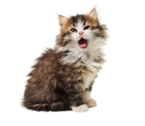 猫のしゃっくりが止まらない? 止め方や原因、考えられる病気と予防法について
