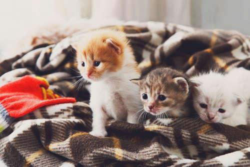 猫の猫伝染性腹膜炎(FIP) 考えられる原因や症状、治療法と予防法