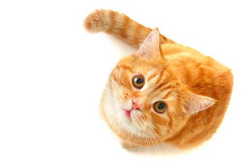 猫の目薬 用途や上手なさし方。人間用の目薬は使っていいの?