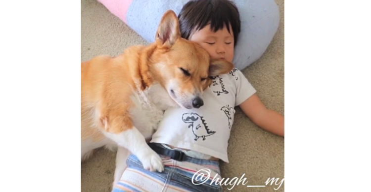 【まるで兄弟】ピタッと密着してお昼寝する男の子とコーギー。ふたりの幸せそうな様子に、ほっこり♡