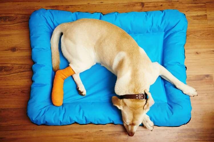 万が一に備えて。犬の骨折の症状や処置方法など