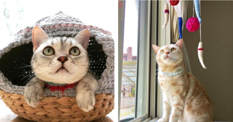飼い主さんの手作りアイテムに囲まれて暮らす2匹の猫たち。幸せいっぱいな日常にホッコリ♡(11枚)