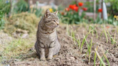 猫に玉ねぎは食べさせてはいけません! ねぎ類の有毒性について