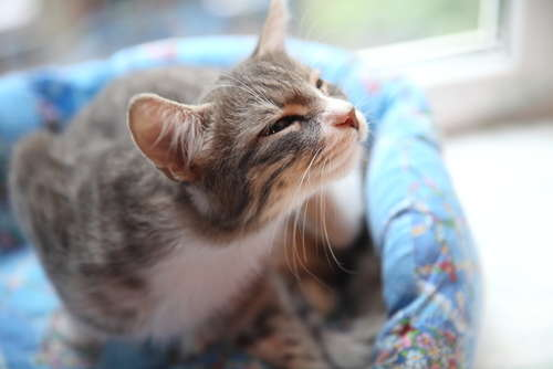 猫のダニ事情。症状や原因、治療法、予防法について