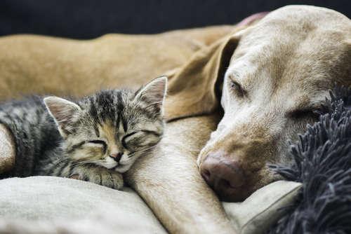 同居前に考えよう。猫と犬を仲良くさせる秘訣について