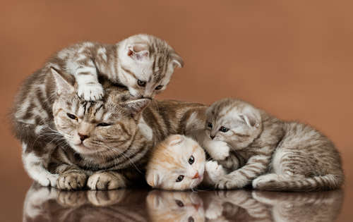 猫の繁殖について解説。猫はいつ、どうやって交尾をするのか