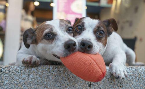 【獣医師監修】犬が異物を飲んでしまった! 誤飲の症状と対処法について