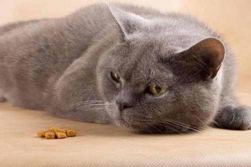 猫がご飯を食べない。原因や考えられる病気と対策について