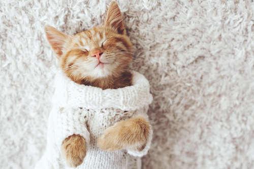 猫の風邪 考えられる原因や症状、治療法と予防法