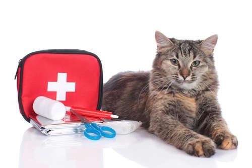 猫のエイズ 考えられる原因や症状、治療法と予防法