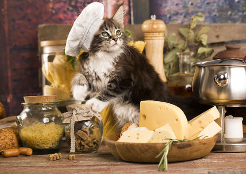 猫にチーズを与えていい? チーズの注意点について