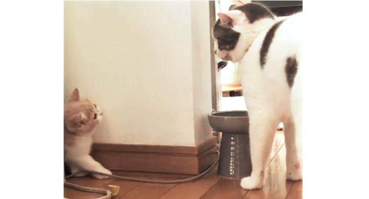 『ほんとは仲よくしたいの…』新しく家族になった子猫→ 先住猫との距離感が、もどかしかった(ノД`)♡