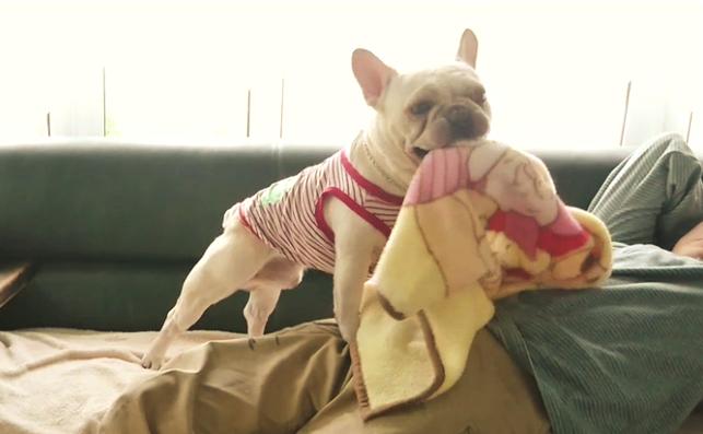 【風邪ひくワン!】うたた寝してしまった飼い主さんを見たワンコ→ そっと布団を掛けてくれた( ゚Д゚)