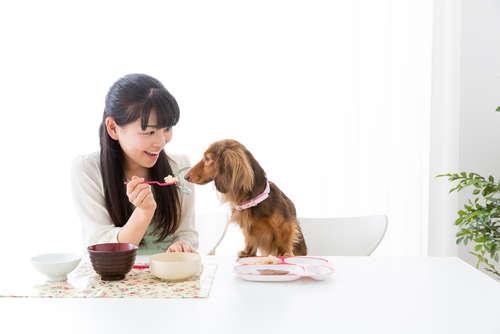 犬にお米を与えていい? お米のメリットと注意点について