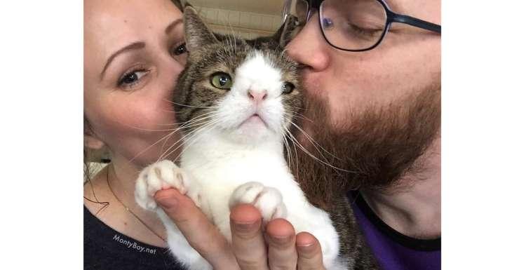 鼻筋がないまま生まれ保護施設で暮らしていた猫 → ある夫妻との出逢いが、運命を大きく変える(12枚)