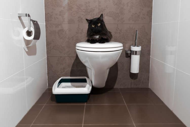 猫のトイレ しつけ方やトイレ環境、失敗した時の対策など