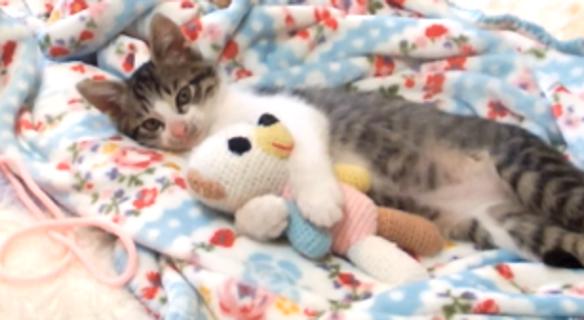 ウトウトする子猫に、ぬいぐるみをプレゼントした → ギュッと抱きしめて離さない…(*´﹃`*)♡