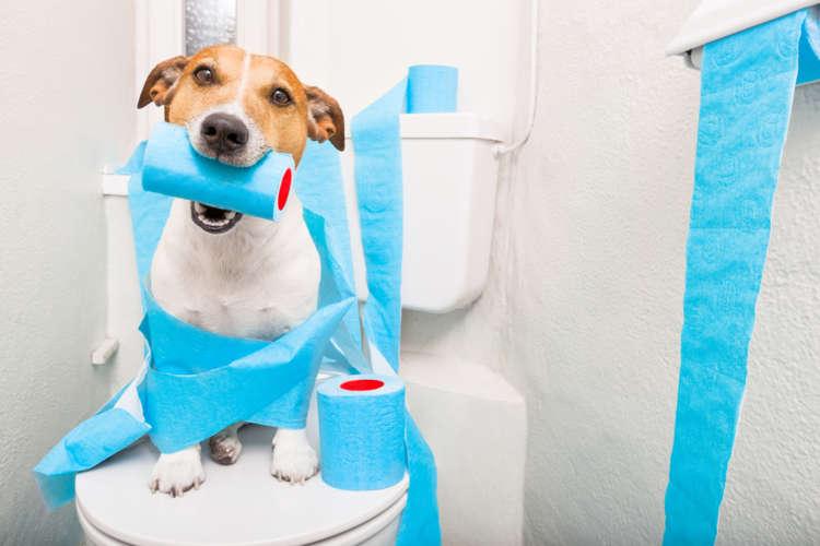 犬のトイレ  しつけ方やトイレ環境、失敗したときの対策など