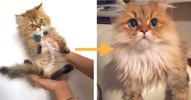 【まるで別ネコ♡】ネコたちの成長前後を見比べた、ビフォーアフター写真集!(10枚)