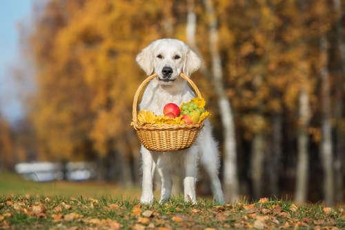 【獣医師監修】野菜・果物を犬に与える際の注意点。食べてはいけない食材は?