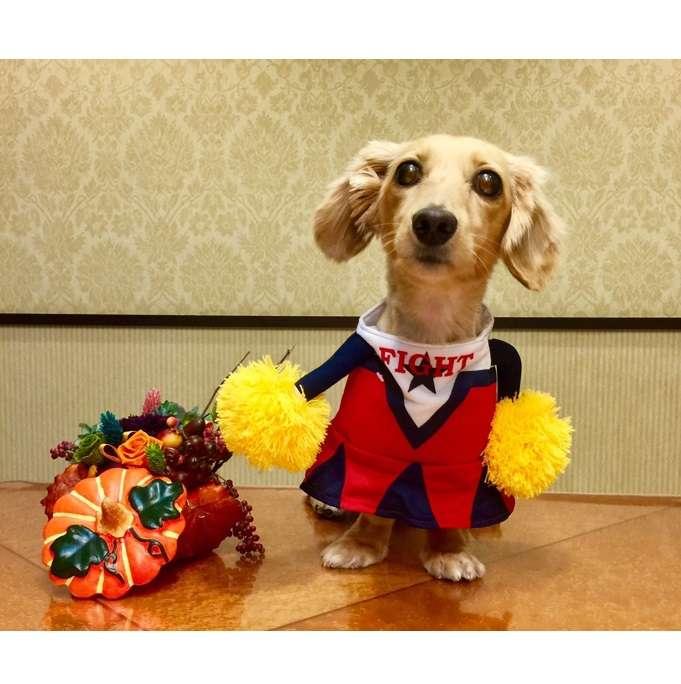 ペティオの衣装で楽しくコスプレ♪ 秋の一大イベント「ハロウィン」を愛犬・愛猫と楽しもう♡