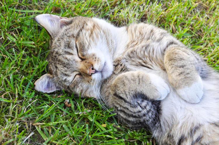 猫の寄生虫を除去しよう。虫下し(駆虫薬)について
