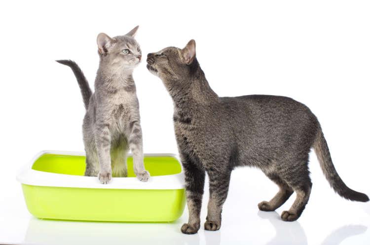 猫の膀胱炎 考えられる原因や症状、治療法と予防法
