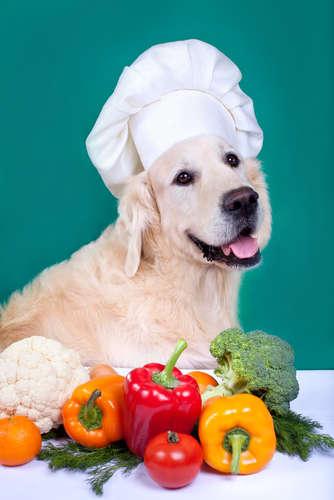 【獣医師監修】犬にピーマンを与えても大丈夫? ピーマンのメリットと注意点について